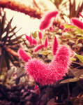 The Truffula Plant