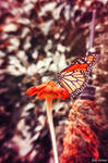 Vintage Butterfly by EvelynVictus