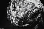 Like A Dinosaur by EveVictus