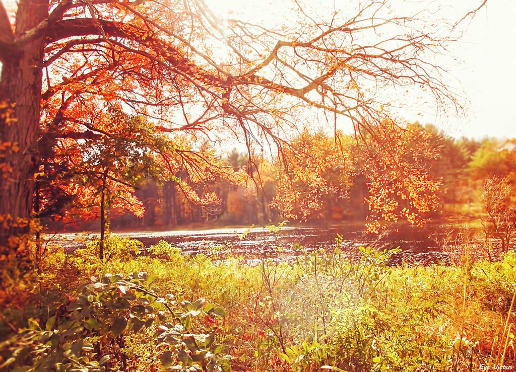 Vibrant Autumn by EveVictus