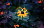 Magical Garden by EvelynVictus
