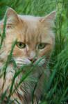 Summer Cat 2