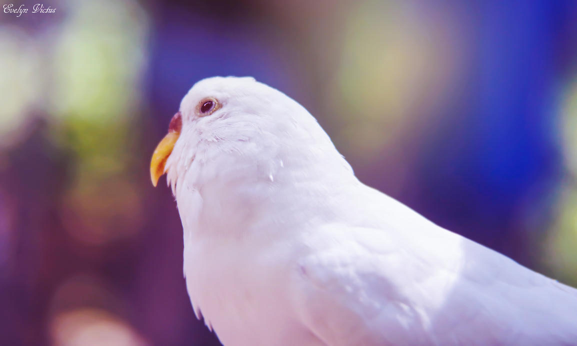Dreamy Bird by EveVictus