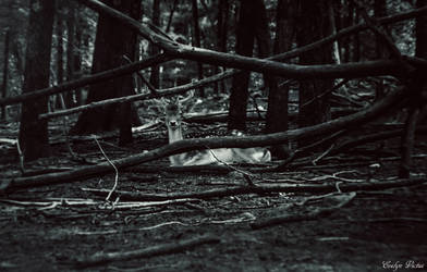 Deer in the Forest by EveVictus