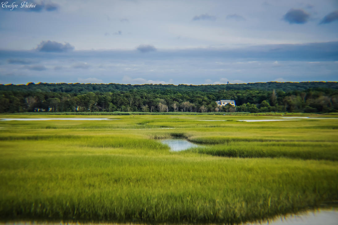 Marshes in Cape Cod by EveVictus