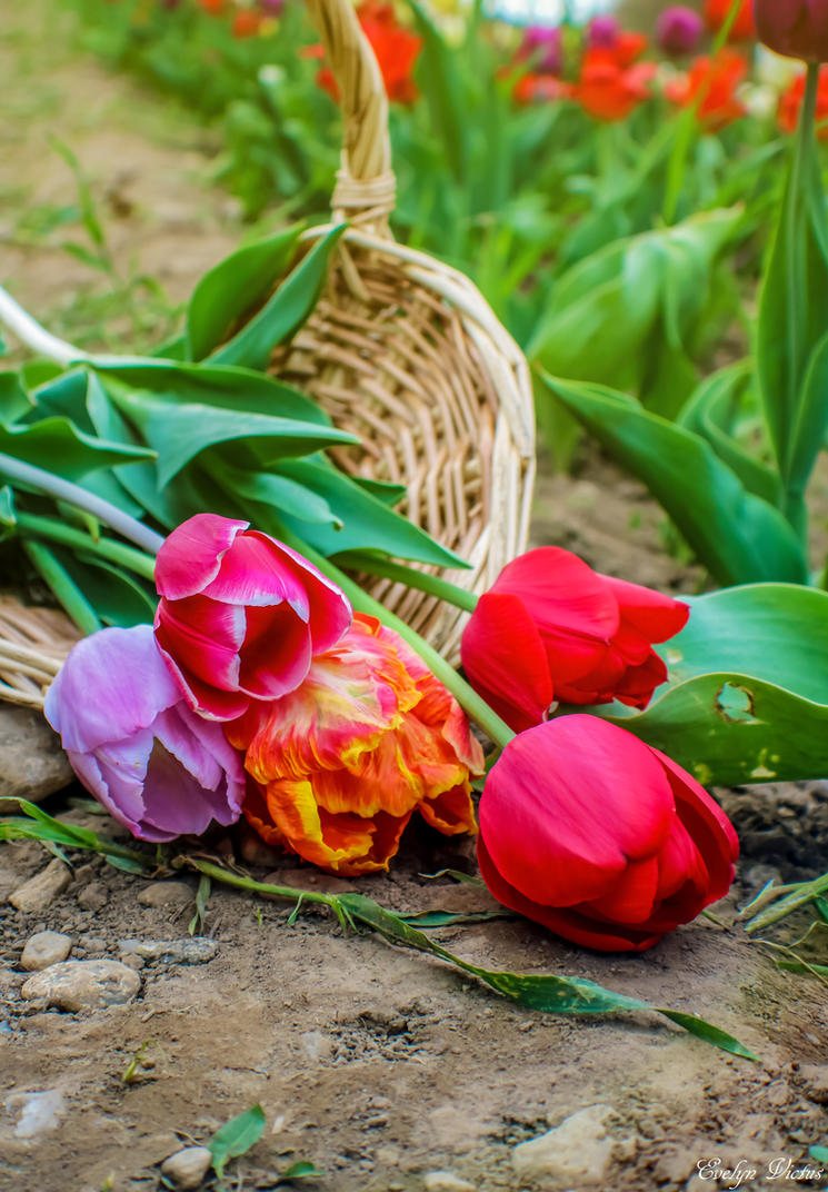 Basket of Tulips by EveVictus