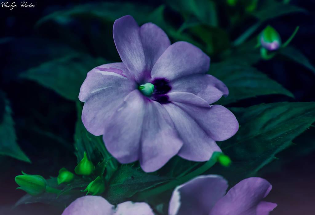 Night Flora by EveVictus