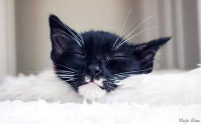 Sleepy Osiris