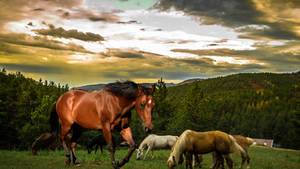 Meadow of Horsey Friends by Creativa-Artly01