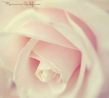 Soft pink rose by Marianna9