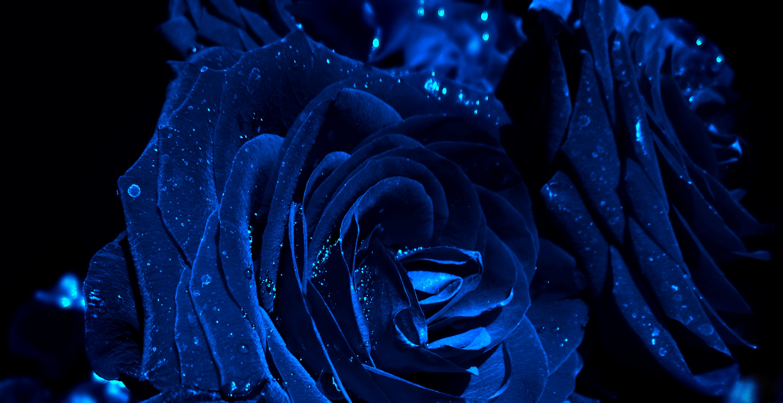 Blue roses by Marianna9 on DeviantArt