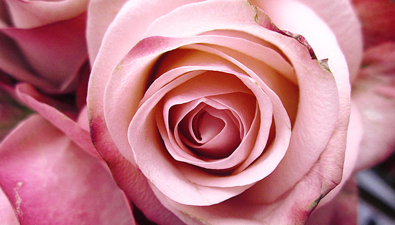 Pink Miracle by Marianna9