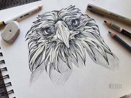 Eagle portrait by MsLydix