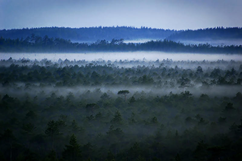 Nuzeeri: Zhaxix Mist_in_the_bog_by_fragoline