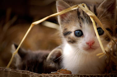 Little Kitty by Fragoline
