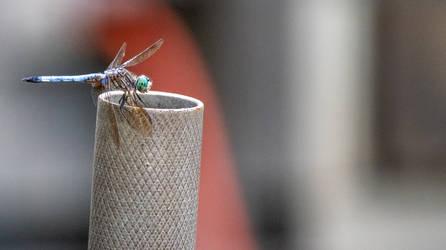 Dragon Fly II