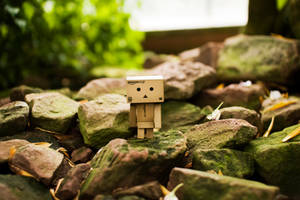 danbo by baybeehh