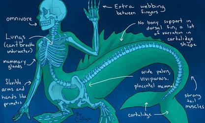 Mermaid Anatomy by SilentCyllya