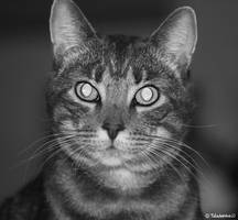 Smokey, the Cat - Close Up by TaladarkieJJ