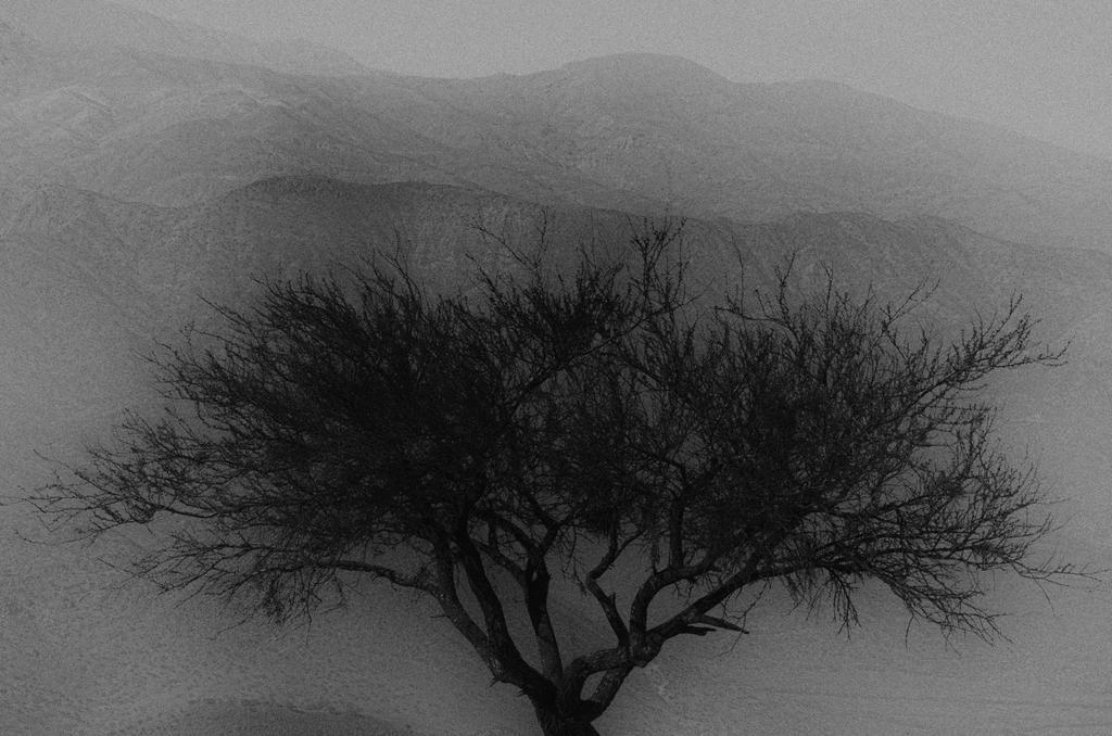 One tree by LidiaRossana