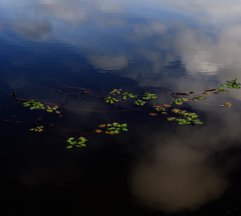 Leaves on water by LidiaRossana