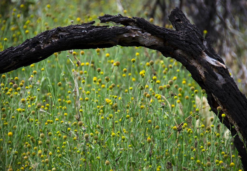 Wild field by LidiaRossana