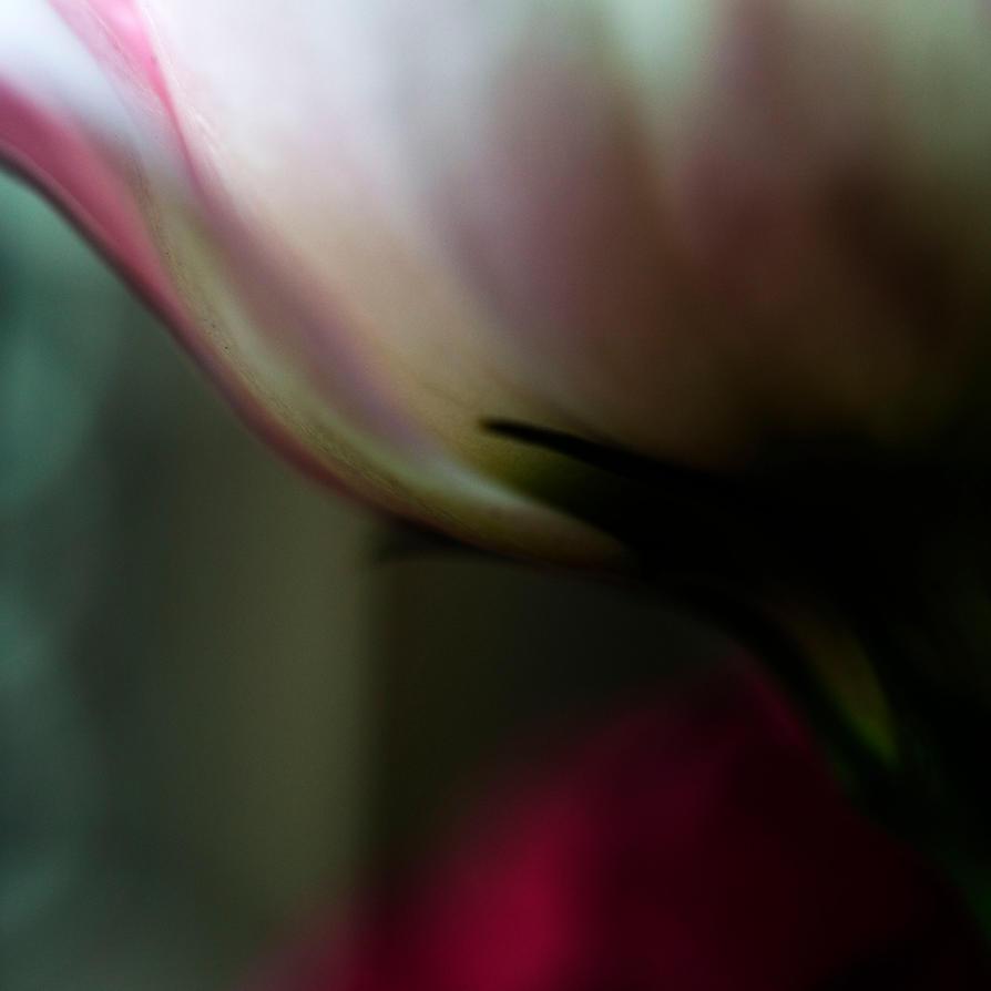 Romance by LidiaRossana