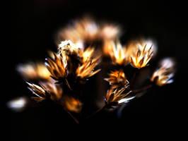 Dried by Sun by LidiaRossana