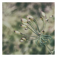 For Maryellen by LidiaRossana