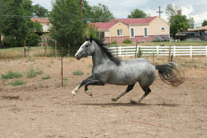 Blue Roan Stock 78 by tragedyseen