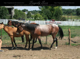 quarter horse stock 27 by tragedyseen