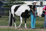 Paint Horse Stock 11