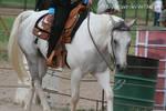 Paint Horse Stock 39