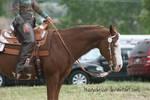 Paint Horse Stock 43