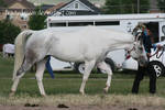 Paint Horse Stock 50