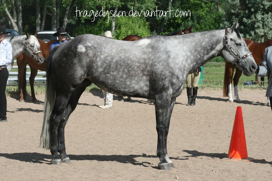 http://fc03.deviantart.net/fs71/i/2011/170/5/a/quarter_horse_stock_47_by_tragedyseen-d3jdflp.jpg