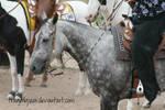 Quarter Horse Stock 83