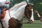 Paint Horse Stock 87
