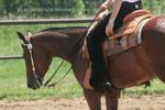 Quarter Horse Stock 102
