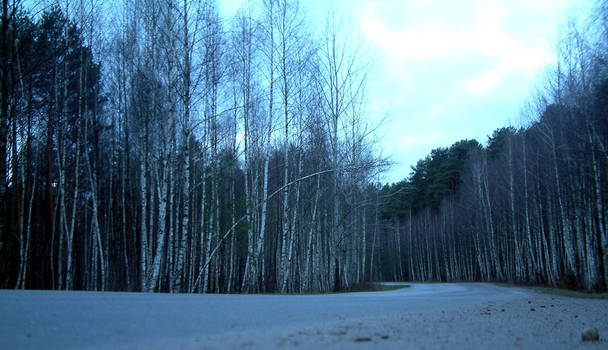 Ironic Birch Grove by puodukas