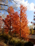 The colours of fall: Red leaves