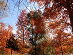 The colours of fall: Red leaves 2