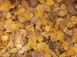 The colours of fall: yellow leaves