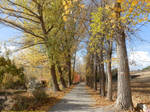 The colours of fall: road among trees