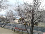Spring is coming 2