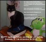 Buffy -gata perdida en Granada- LOST KITTEN