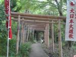 Tunnel of bamboo toriis