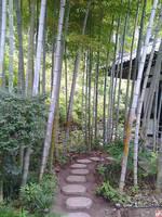 Bamboo path by kawano-katsuhito