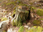 Moss-covered stump