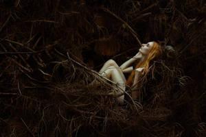 In the woods by Spiegellicht